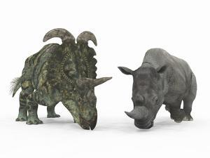An Adult Albertaceratops Compared to a Modern Adult White Rhinoceros by Stocktrek Images