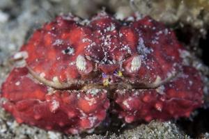 An Unidentified Crab Sits on the Seafloor by Stocktrek Images
