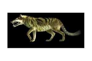 Andrewsarchus Lived During the Eocene Epoch of Mongolia by Stocktrek Images