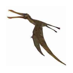 Anhanguera Dinosaur by Stocktrek Images