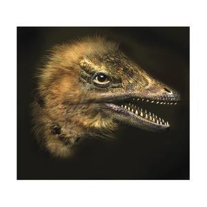 Archaeopteryx Portrait by Stocktrek Images