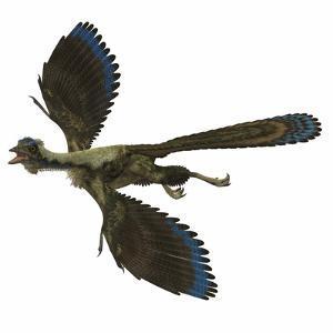 Archaeopteryx Prehistoric Bird by Stocktrek Images