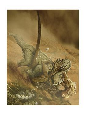 Battle Scene Between a Velociraptor and Protoceratops in the Mongolian Desert by Stocktrek Images