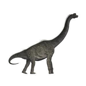 Brachiosaurus Dinosaur by Stocktrek Images