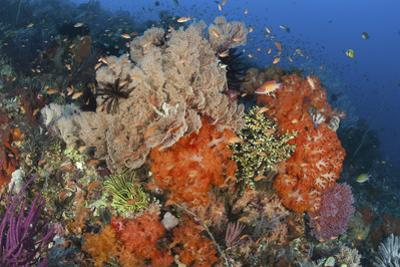 Bright Sponges, Soft Corals and Crinoids in a Colorful Komodo Seascape