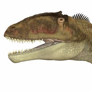 Carcharodontosaurus Dinosaur Head by Stocktrek Images