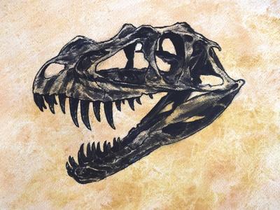 Ceratosaurus Dinosaur Skull