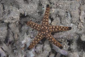 Close-Up of a Sea Star, Beqa Lagoon Fiji by Stocktrek Images