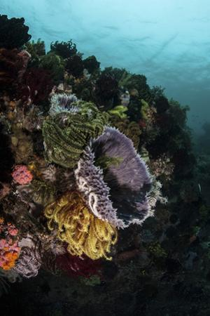 Colorful Crinoids and Sponges Grow on a Vibrant Reef in Indonesia