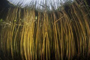Colorful Reeds Grow to the Surface Along the Edge of a Freshwater Lake by Stocktrek Images