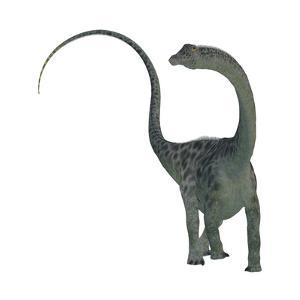 Diplodocus Dinosaur by Stocktrek Images