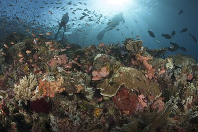 Diver Looks on at Sponges, Soft Corals and Crinoids in a Colorful Komodo Seascape