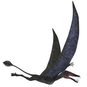 Dorygnathus Pterosaur from the Jurassic Period by Stocktrek Images