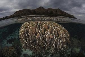 Fragile Corals Grow in Komodo National Park, Indonesia by Stocktrek Images