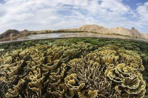 Fragile Corals Grow in Shallow Water in Komodo National Park by Stocktrek Images