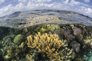 Gorgonians and Reef-Building Corals Near the Blue Hole in Belize by Stocktrek Images