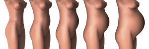 Growth of Female Midsection During Pregnancy Stages by Stocktrek Images