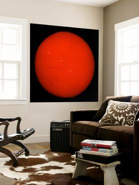 H-Alpha Full Sun in Red Color with Active Areas and Filaments by Stocktrek Images