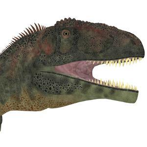 Mapusaurus Dinosaur Head by Stocktrek Images