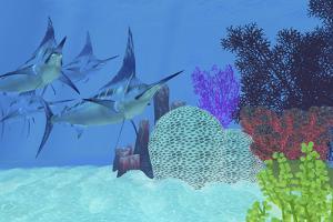 Marlin Predatory Fish Look for Prey around an Ocean Coral Reef by Stocktrek Images