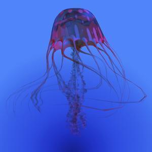 Red Jellyfish Illustration by Stocktrek Images