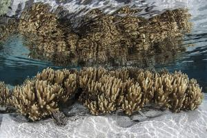 Soft Leather Corals Grow in the Shallow Waters in the Solomon Islands by Stocktrek Images