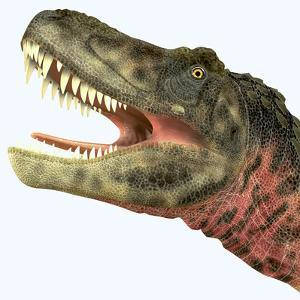 Tarbosaurus Dinosaur Roaring by Stocktrek Images