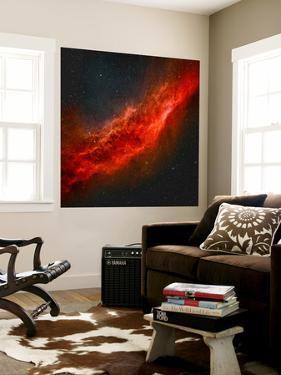 The California Nebula by Stocktrek Images