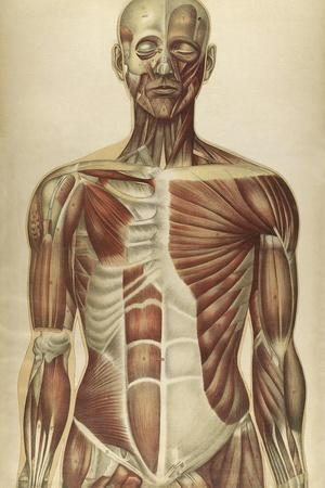 The Human Body with Superimposed Colored Plates by Julien Bougle
