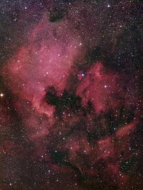 The North American Nebula (NGC 7000) is an Emission Nebula in the Constellation Cygnus by Stocktrek Images