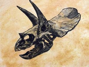 Triceratops Dinosaur Skull by Stocktrek Images