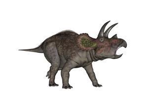 Triceratops Dinosaur by Stocktrek Images