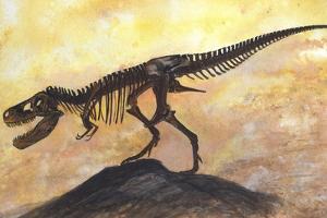 Tyrannosaurus Rex Dinosaur Skeleton by Stocktrek Images