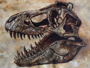 Tyrannosaurus Rex Dinosaur Skull by Stocktrek Images