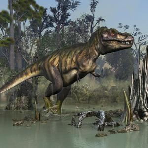 Tyrannosaurus Rex Hunting in Prehistoric Wetlands by Stocktrek Images