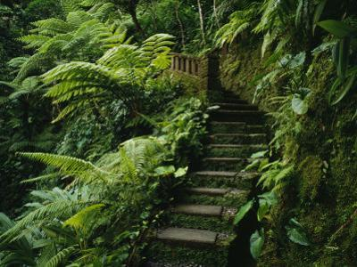 Stone Steps and a Path Cut Through Dense Jungle and Palm Trees