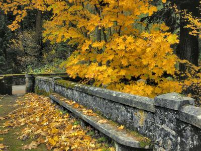 https://imgc.allpostersimages.com/img/posters/stone-wall-framed-by-big-leaf-maple-columbia-river-gorge-oregon-usa_u-L-PN6ZEM0.jpg?p=0