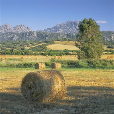https://imgc.allpostersimages.com/img/posters/straw-bales-in-fields-sardinia-italy-europe_u-L-P2QWSZ0.jpg?p=0