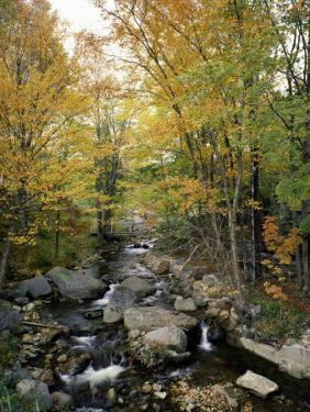 Stream Flowing in a Forest, Vermont, USA