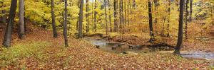 Stream Flowing Through a Forest, Emery Park, East Aurora, Erie County, New York, USA