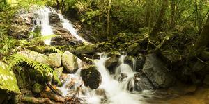 Stream flowing through a forest, Tzaneen, Limpopo Province, South Africa