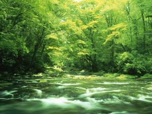 Stream Flowing Through a Forest