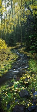 Stream Flowing Through Forest
