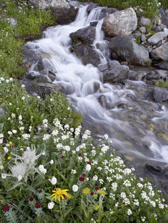 https://imgc.allpostersimages.com/img/posters/stream-through-wildflowers-american-basin-uncompahgre-national-forest-colorado-usa_u-L-P7NY8W0.jpg?p=0