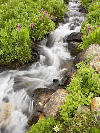 https://imgc.allpostersimages.com/img/posters/stream-through-wildflowers-mineral-basin-uncompahgre-national-forest-colorado-usa_u-L-P7NY9S0.jpg?p=0