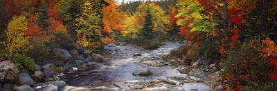 Stream with Trees in a Forest in Autumn, Nova Scotia, Canada
