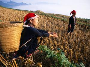 Two Ethnic Red Dao Women in Freshly Harvested Rice Field, Sapa, Lao Cai, Vietnam by Stu Smucker