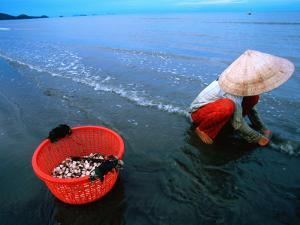 Woman Digs for Crustaceans in Sandy Lagoon on Vietnam's Southern Coast by Stu Smucker