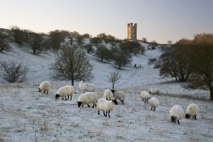 Broadway Tower and Sheep in Morning Frost, Broadway, Cotswolds, Worcestershire, England, UK by Stuart Black
