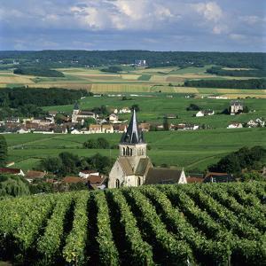 Champagne Vineyards, Ville-Dommange, Near Reims, Champagne, France, Europe by Stuart Black